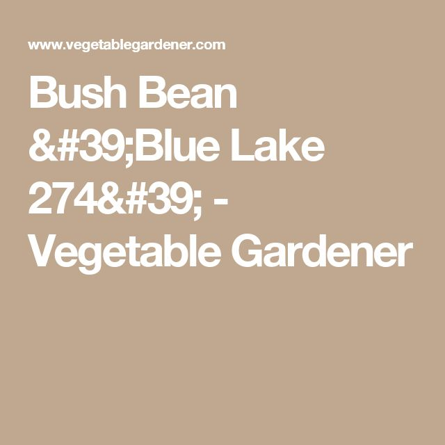 Bush Bean 'Blue Lake 274' - Vegetable Gardener