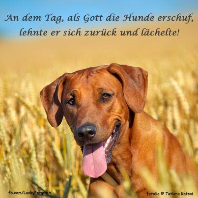 #Hund #Zitat #Spruch #LuckyPet