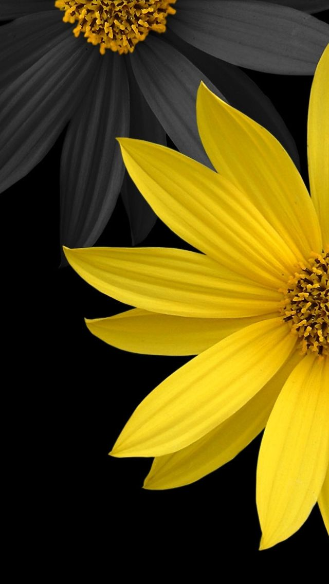 Simple Flower Black And Yellow