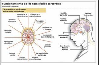 hemisferios2.jpg (328×216)