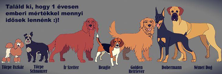 A világ legidősebb kutyája, egy Bella névre hallgató Labrador Retriever volt, aki 2008-ban hunyt el 29 évesen. A hír bejárta a világot, melyet a média így