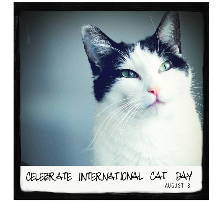 Celebrate International Cat Day on August 8th, 2016! Come visit www.awarmhello for a calendar of great holidays happening this August!