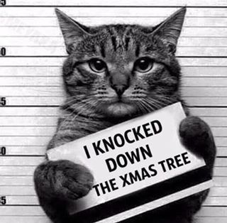Who knocked down the #Christmas tree??