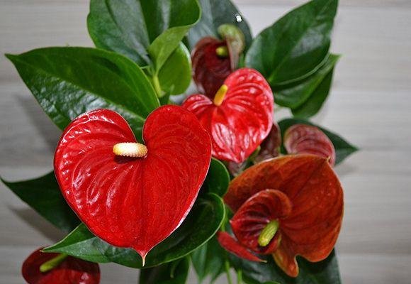 Польза комнатных растений и цветов для дома | YACENKA