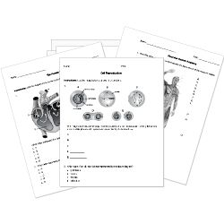 Free Printable Biology Tests, Worksheets, and Activities - New worksheets! Diagrams of the Butterfly Life Cycle, Food Webs, Amoebas, Euglena, and Paramecium just added