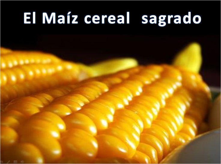 El maíz, un cereal sagrado!
