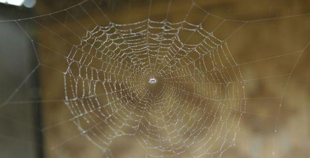 Pavouci nebývají zrovna vítanými návštěvníky obydlí. Pokud se jich chcete zbavit, můžete využít i řadu šetrných způsobů.