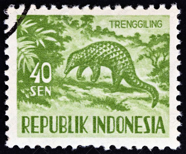 Indonesia stamp - one of the definitives from 1956.  Most stamp collectors will have the little deer (chevrotain) in their collection but my favourite is the Malay Pangolin.  So it is sad to know that this lovable creature is one of  THE MOST illegally trafficked animals in the world and that 20% of black market sales are pangolins.   AM