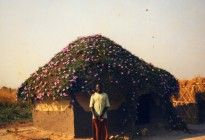 Zambia Man standing in front of his home wit a roof covered with flowering plants (submitted by Jon Twingi Sojkowski)