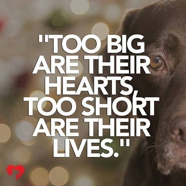 Pin By Susy Azul On Dog Quotes Dog Quotes Dog Love Dog Quotes Love