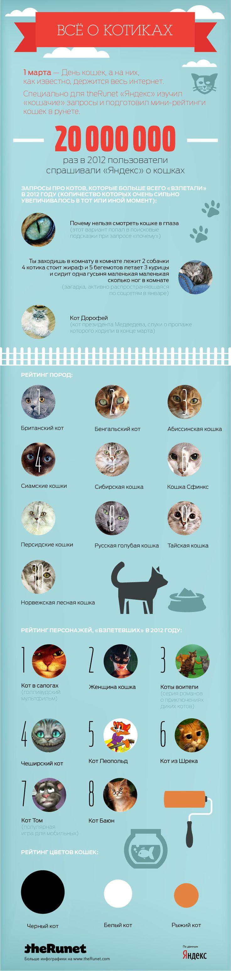 Инфографика: котики 2012
