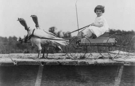 Crazy Old Playthings: An Internet Treasury Of Animals Pulling Kids Around:Turkey Wagons