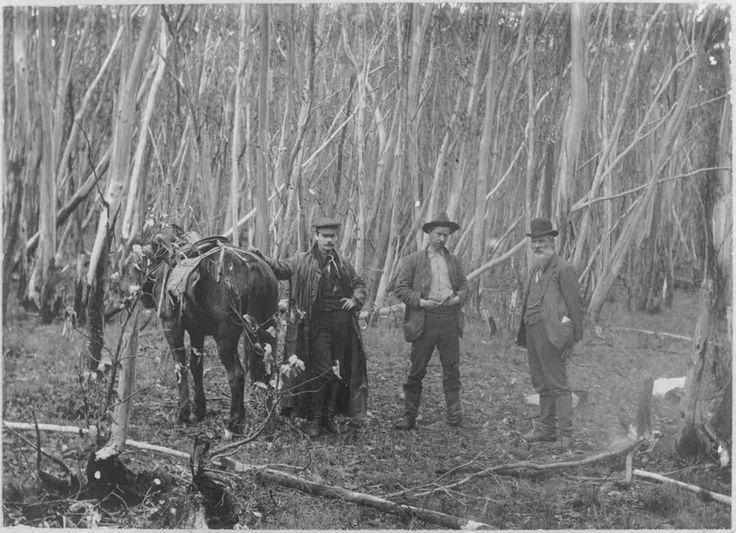 Geologists W. Baragwanath, O.A.L. Whitelaw and E.J.Dunn on the track to Mount Selma, south east of Woods Point Victoria Australia , circa 1904