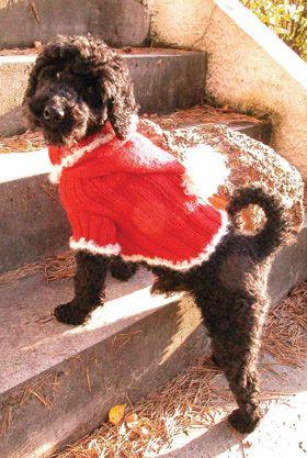 Julenissebluse til hunde