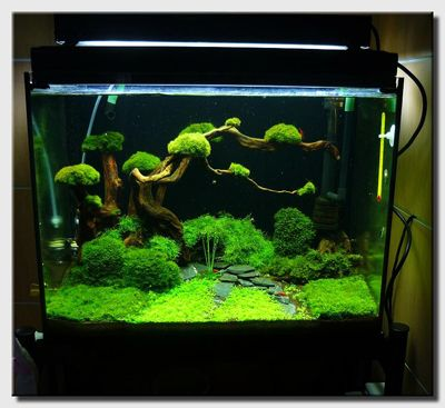 Interior Design: Nature Style Aquascaping Bonsai Style Tree