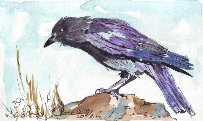 Like this art blog...(and crows and ravens and someday I'm going to paint one)