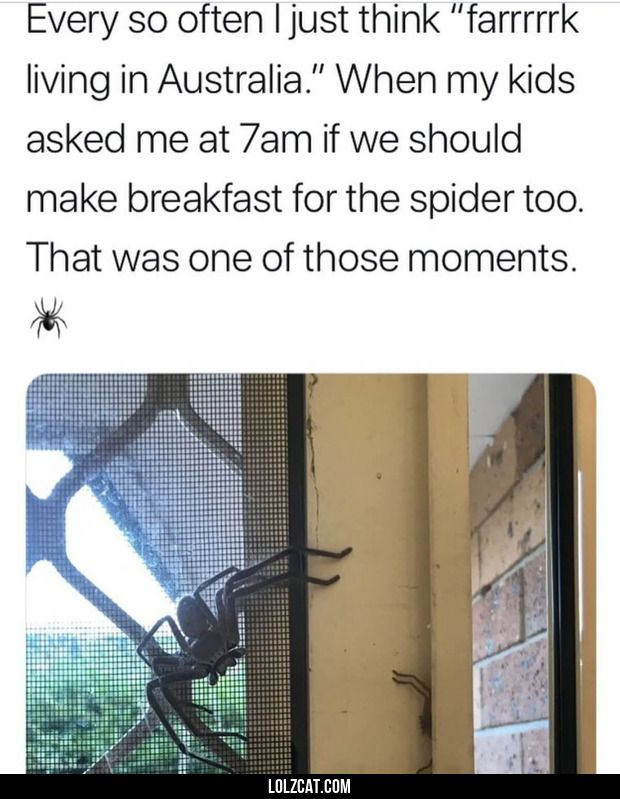 Ill take one of those kids for breakfast, mate. -Spider#funny #lol #lolzonline