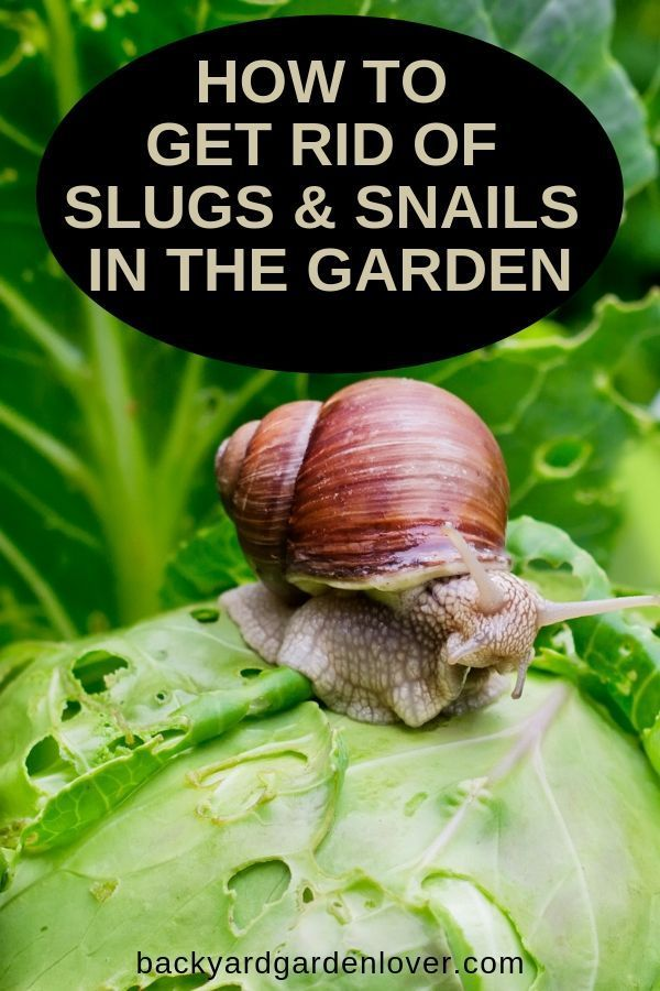 How To Get Rid Of Slugs And Snails In The Garden Getting Rid Of