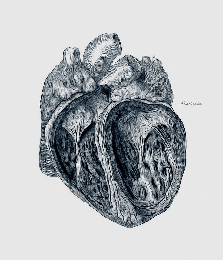 Sketch Is Just A Delicious Piece Of Human: 17 Best Ideas About Heart Sketch On Pinterest
