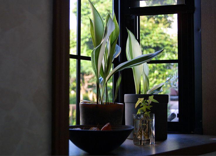 kleines deko strategien die ihre raumgestaltung zu weihnachten perfekt abschliesen am besten pic der addeabfbfdecee bamboo palm jade plants