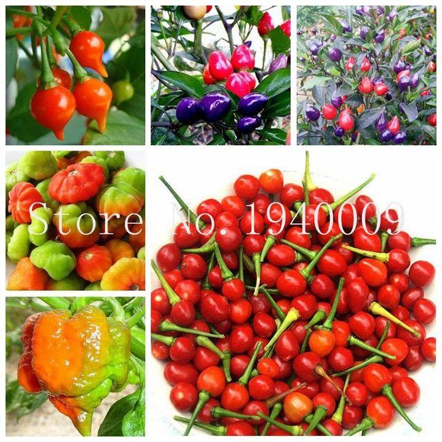 Pepper Paprika 200 PCS   Home Garden Vegetable Plants Planting  Grow Red Summer