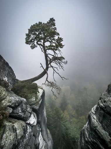Tree on Mountain - photo-wallpaper