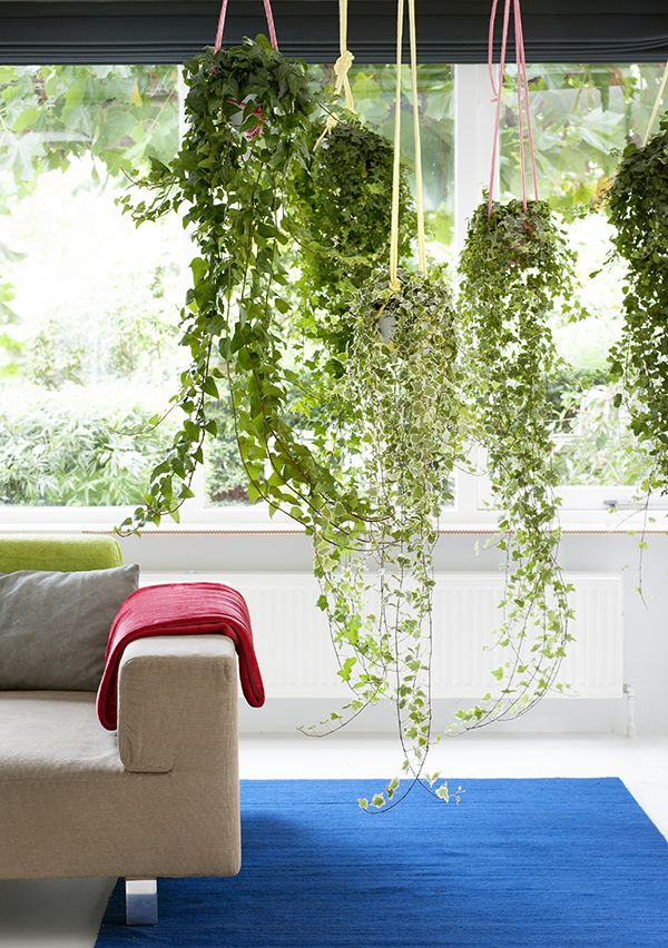 Ideas para decoración con plantas en Octubre - Casas Javer Blog