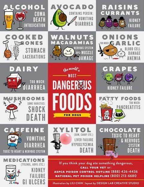 Dangerous Foods for Dogs .. I just learned today from the Pet Poison Hotline that Avocado is not likely to be dangerous for dogs. Click through for more information.