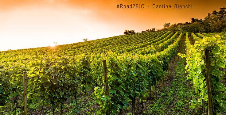 #Road2BIO – Verso un vino naturale