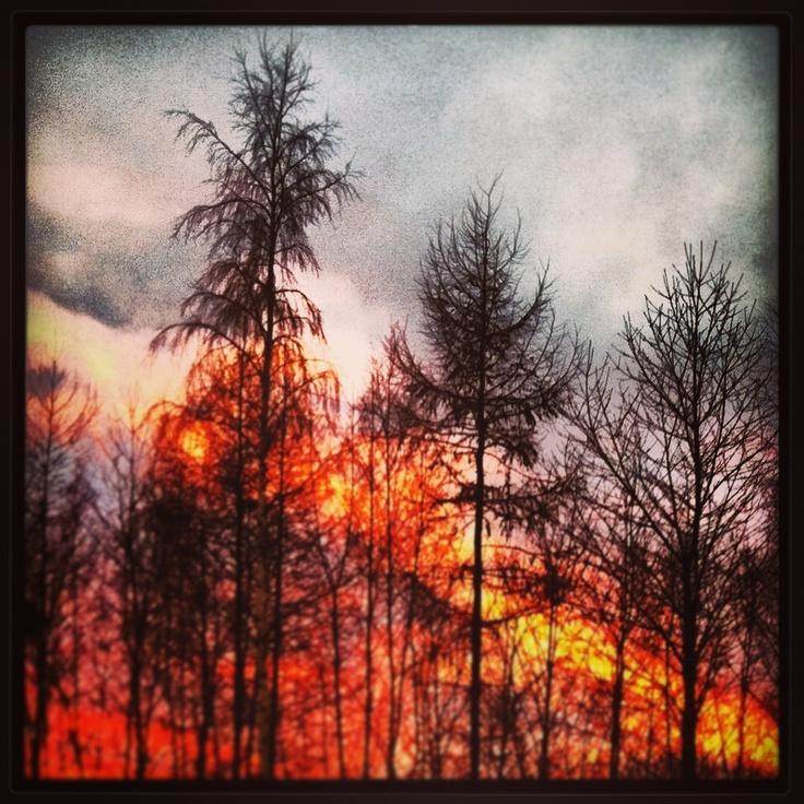 Skogsbrand? Solnedgång!