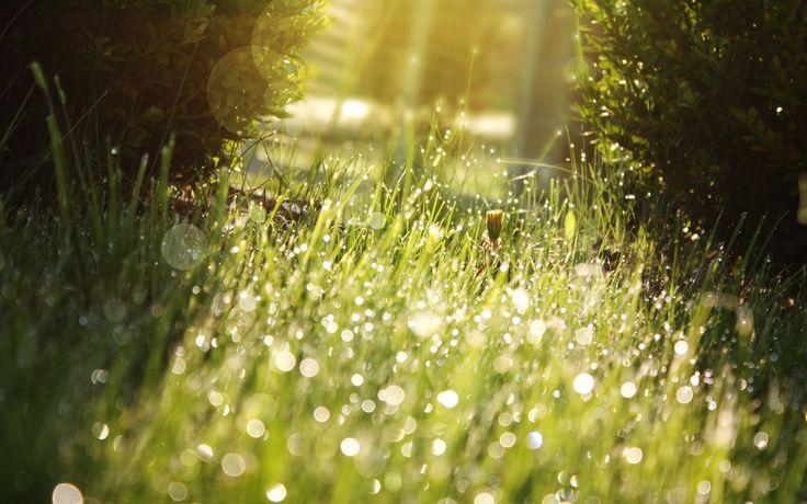 Nature grass sunlight water drops macro depth of field wallpaper | 2560x1600 | 19065 | WallpaperUP