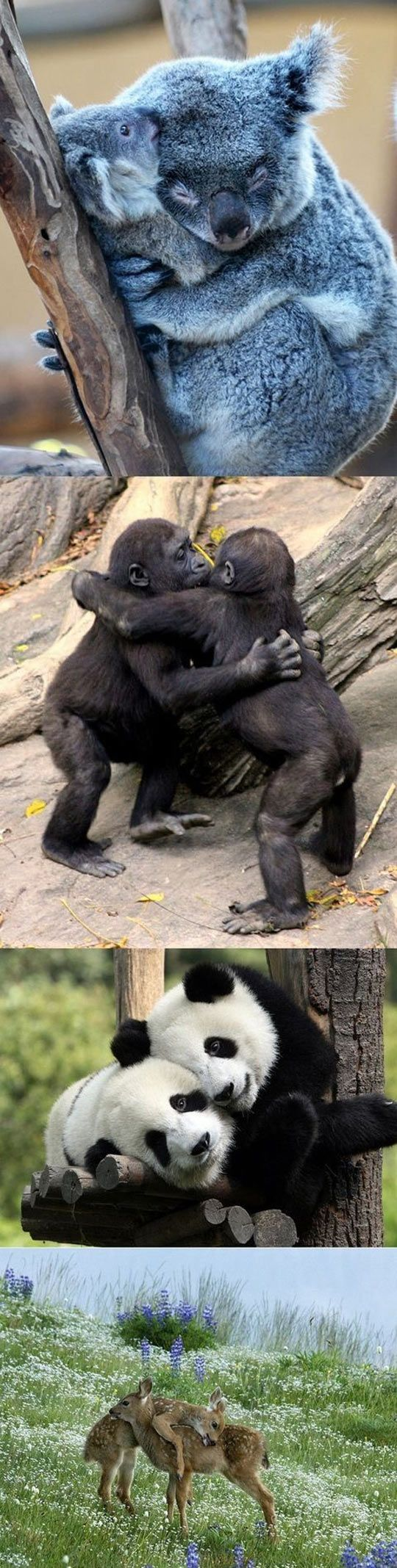 Aww so cute OMG this is why we need to be more like animals...Cute caring cooperative loyal non stressed people that genuinely love each other and work together. Thank you animals!!!!!!!