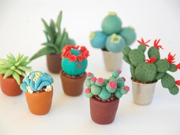 Decorate your fairy garden with these adorable miniatures plants from HGTV Gardens.