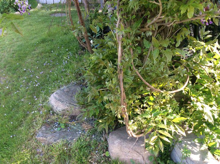 Stones in the garden