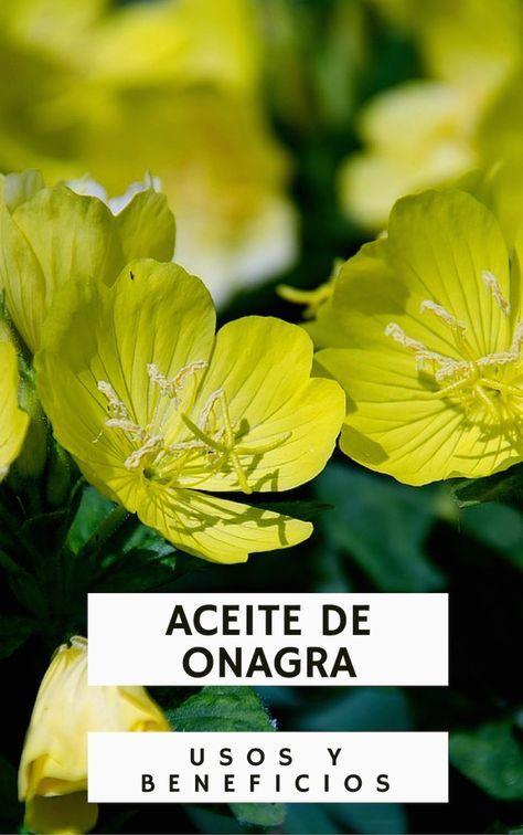 Aceite de Onagra: usos y beneficios