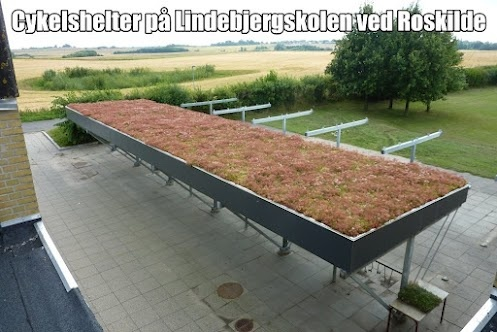 Her et lille billed fra vores VegBloc grønne tag på Lindebjergskolen ved Roskilde. Se også vores lille video fra etaableringer her: http://youtu.be/I296mxZdCe0