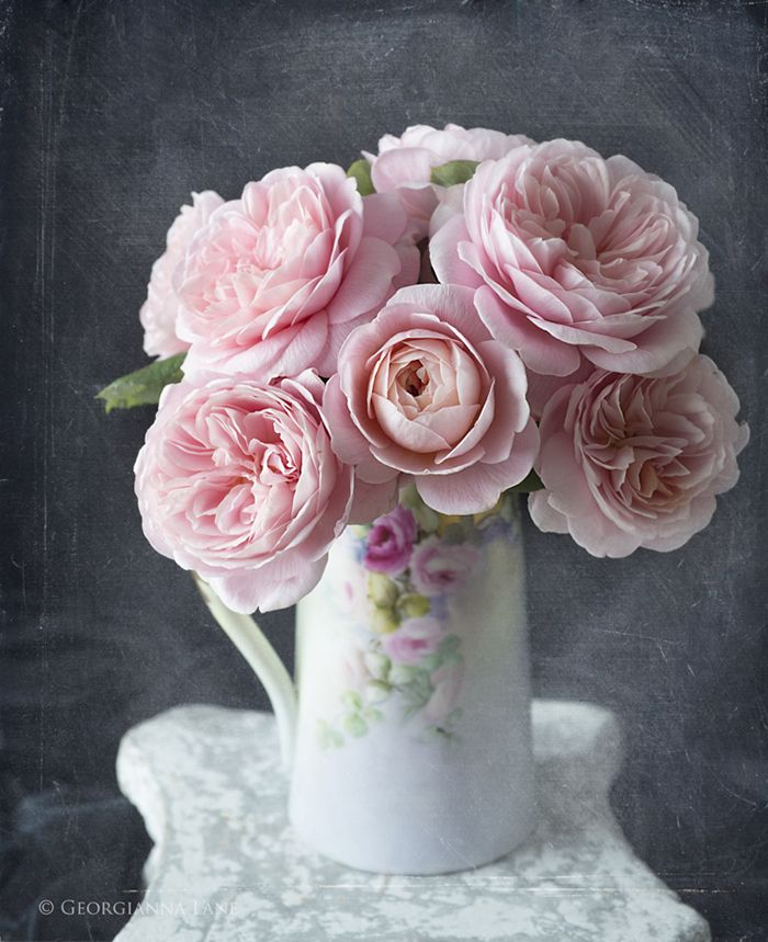 David Austin Rose Queen of Sweden, from All My Thyme Farm, photographed by Georgianna Lane