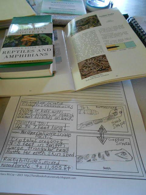 Amphibians Journal 40 best Nature Study -...