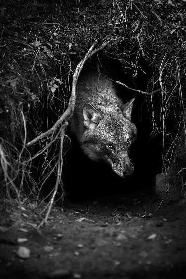 Los miedos más grandes provienen de los cuentos que nos contaban desde niños. Un lobo en medio del bosque durante la noche. Sus ojos encendidos, un gruñido, un ladrido y después, sólo queda una cosa por hacer... correr. #TheBravest