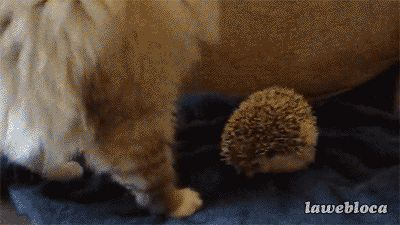 Or sit down where you shouldn't. | Are These The 43 Funniest GIFs Of All Time?