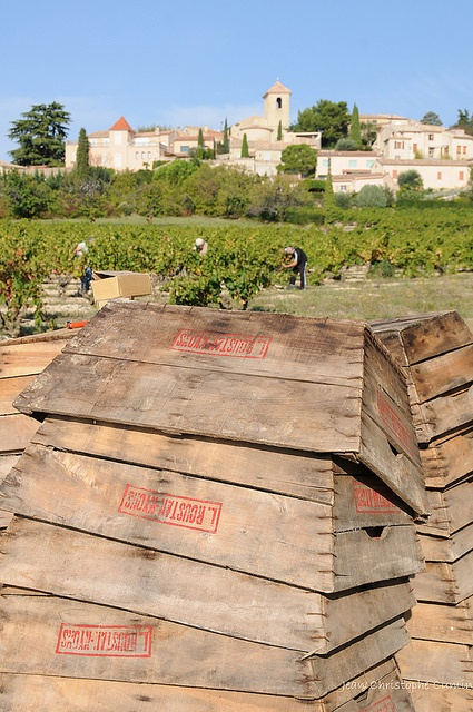 Vendanges à Vinsobres, via Flickr. Crédits photo : Jean-Christophe Cumin