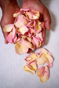 One Cup of Petals