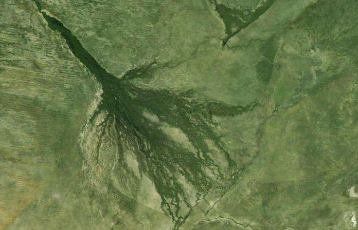 Okavango Delta Trip Report