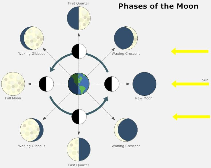 moon phases around the earth - photo #16