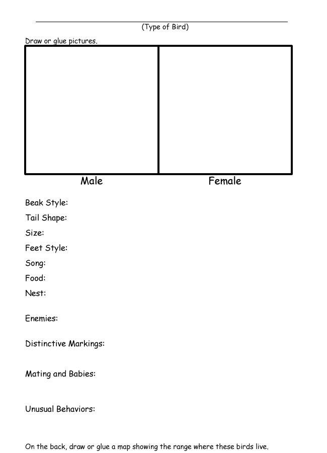 homeschool helper online 39 s free identify a bird book worksheet worksheet science pinterest. Black Bedroom Furniture Sets. Home Design Ideas