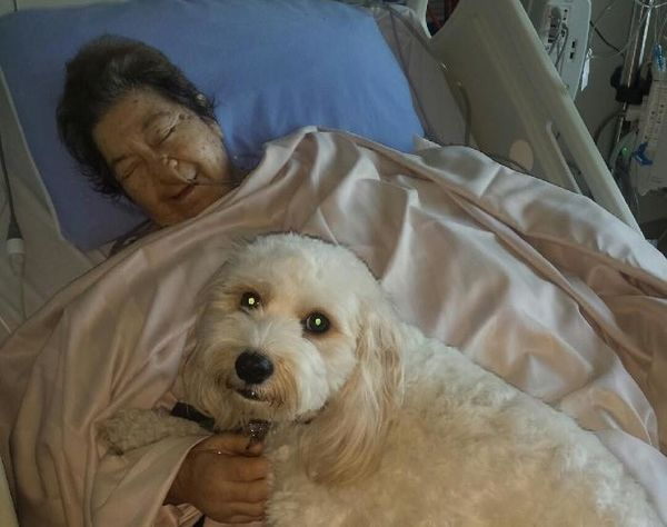 Canadian hospital allows patients to receive visits from their dogs...Every hospital should do this...animals heal.