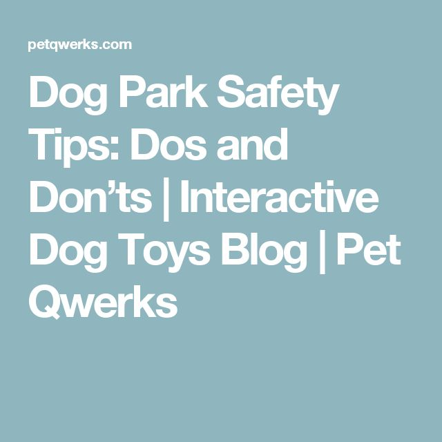 Dog Park Safety Tips: Dos and Don'ts | Interactive Dog Toys Blog | Pet Qwerks