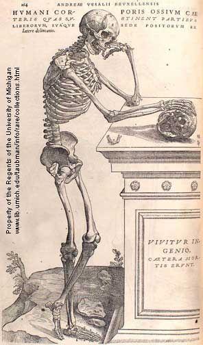 By Andreas Vesalius from De Humani Corporis Fabrica