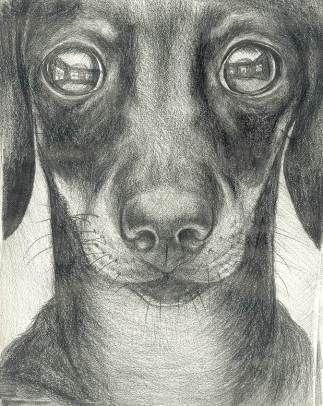 Ольга Тобрелутс. История искусства для собак