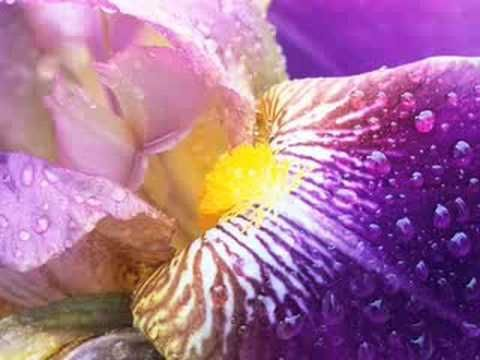 """Sanctus By Libera ( Close up of Flowers ) Request from my Son """"Sunshineperformers"""""""
